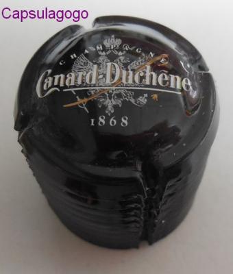 Lot 000 057 canard duchene